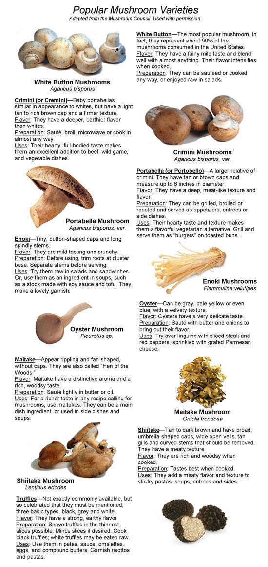 Types Of Mushrooms Chart | www.pixshark.com - Images ...