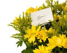 Yeloow Flowers