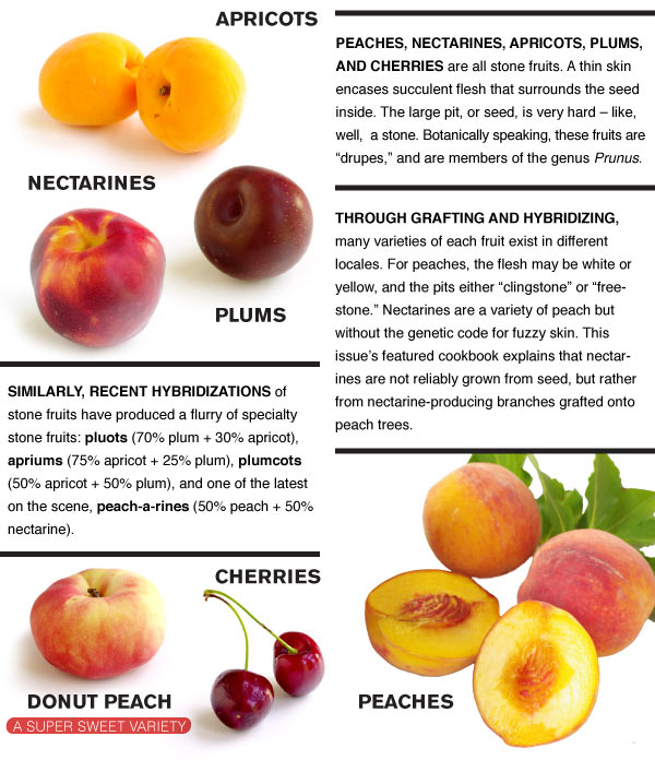 What is a Stone Fruit?