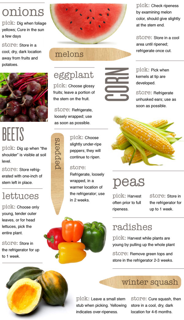 Picking and Storing Veggies