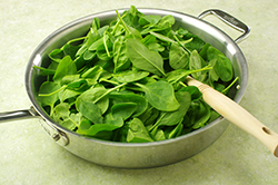 Wilting Spinach