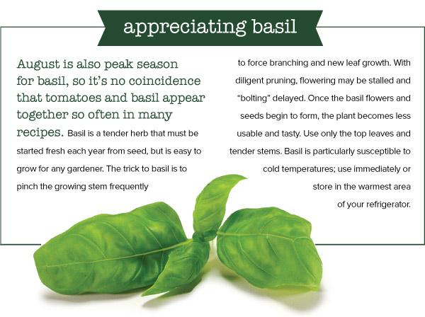 Appreciating Basil