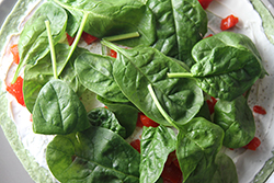 Spinach Leaves added