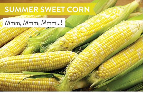 Summer Sweet Corn