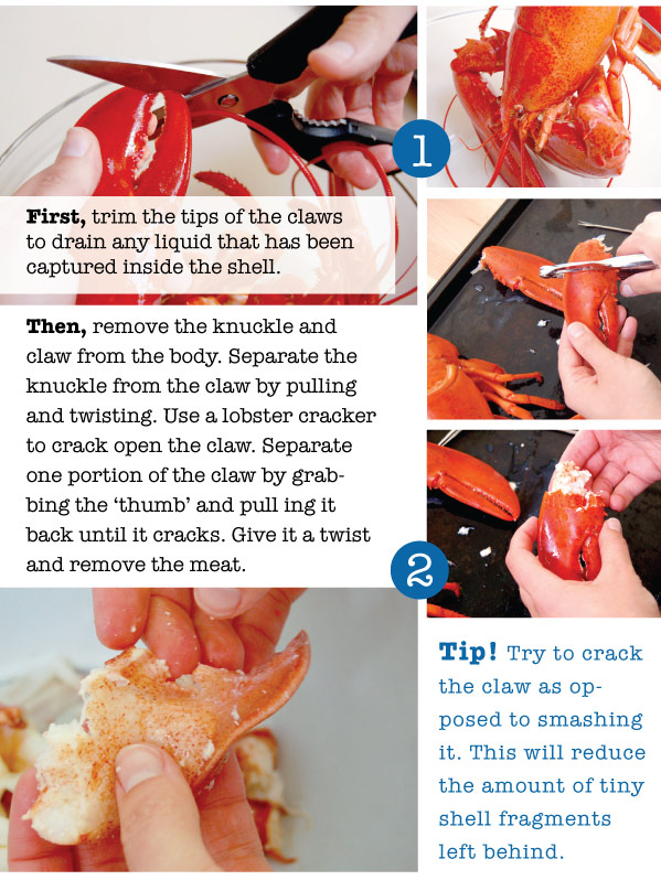 Cleaning a Lobster