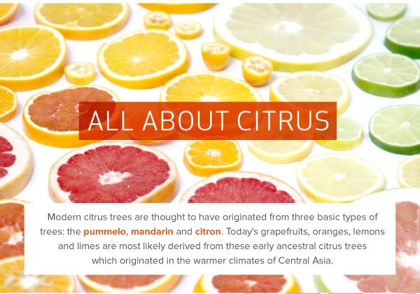 All About Citrus