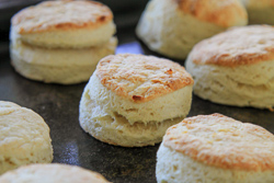Baked Biscuits